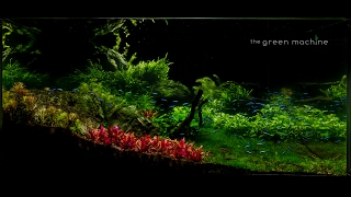 Download Huge Aquascape Tutorial Step by Step- Spontaneity by James Findley for The Green Machine Video