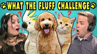 Download ADULTS REACT TO WHAT THE FLUFF CHALLENGE (Confusing your Pets Challenge!) Video