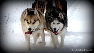 Download Shiloh and Shelby on BAD DOG on Animal Planet Video