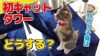 Download 【猫】キャットタワーを設置したらビビリな子猫の反応は?:27日目【Kitten】 Video