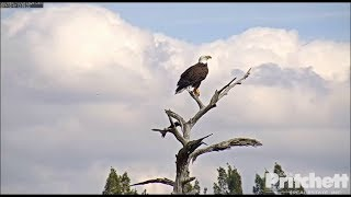 Download SWFL Eagles ~ Harriet The Magnificent ~ Mating & Changing of Guard 12.17.17 Video
