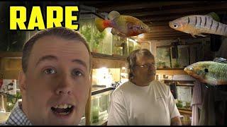 Download Rarest Livebearer Fish Room Tour! Green Dragon Plecos. SelectAquatics Video