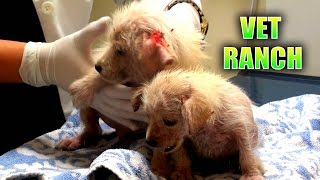 Download Emergency Rescue for Neglected Puppies Video