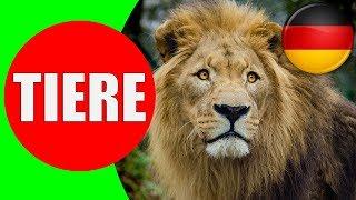Download Tiere für Kinder - Tierstimmen für Kleinkinder, Kindergarten, Baby auf Deutsch | Lernvideo Video