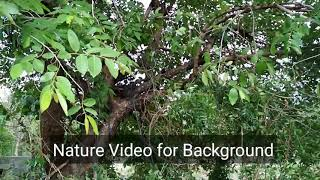 Download Beautiful Nature HD video for Background Video