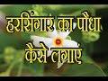 Download हरसिंगार का पौधा कैसे लगाएं, HowTo Grow harsingar NOT- [seeds link below in description] Video