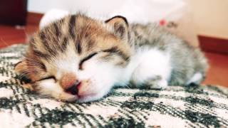 Download 子猫を保護した1日 One day, Rescued a kitten Video