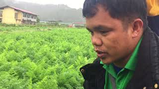 Download Veggie man meets Carrot man. Success in farming. Secret of the trade. Video