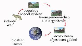 Download Examentraining T4 Ecologie Video