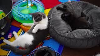 Download Kitten Close Up 2017-12-03 Video