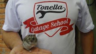 Download Tonella - Video Especial 19-10 Video