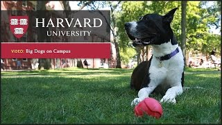 Download Harvard report: Dogs reduce stress Video