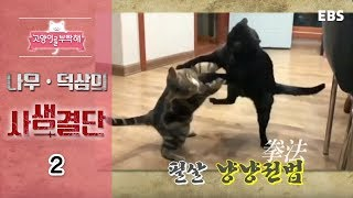 Download 고양이를 부탁해 - 나무 덕삼의 사생결단 #002 Video