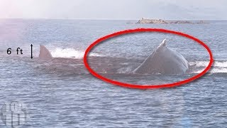 Download 10 Megalodon Caught on Camera & Spotted In Real Life! Video