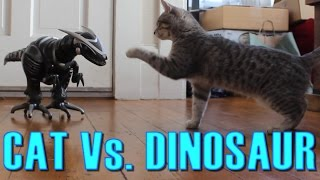 Download Cat Vs. Dinosaur - Cat Spooked, Then Befriends a Robot Dinosaur - Maya The Cat Video