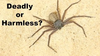 Download DEADLIEST SPIDER ON THE PLANET... is a Total Wimp? Video