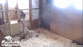 Download Animal Adventure Park Live Stream Video