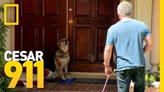 Download All Bark and Hopefully No Bite | Cesar 911 Video