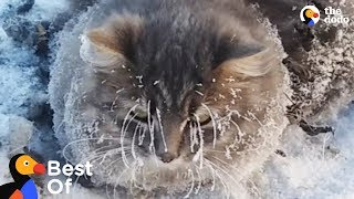 Download Frozen Animal Rescues | The Dodo Best Of Video