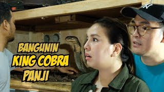 Download GARAGA KING COBRA NGAMUK TIAP ADA TAMU COWO PANJI PETUALANG Video