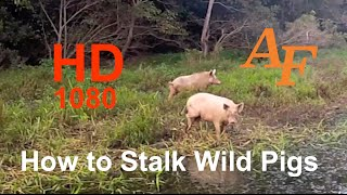 Download How to Stalk Wild Pigs or Hogs Bow Hunting Style. A game I Play. Andysfishing Andy Thomsen EP.83 Video