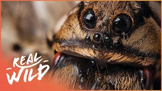 Download Scary Animals: Super Creeps [Animal Phobia Documentary] | Wild Things Video