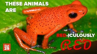 Download 25 Amazing RED ANIMALS You NEED To See To Believe Video