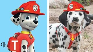 Download 10 PAW PATROL Dogs In Real Life Video