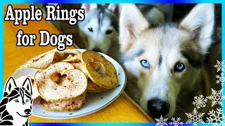 Download DIY APPLE RINGS FOR DOGS 🍏 | DIY Dog Treats | Snacks with the Snow Dogs 83 Video