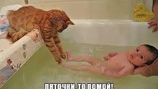 Download Подборка Смешная Супер Котята Video