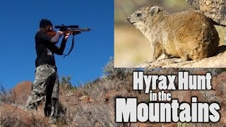 Download Hyrax Hunt in the Mountains - The Experience is Worth the Climb! Video