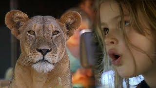 Download Children Watch Lion Kill Zebra - This Wild Life - BBC Earth Video