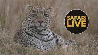 Download safariLIVE - Sunrise Safari - July 16, 2018 Video