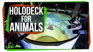 Download We Built a 'Holodeck' for Animals! Video