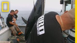 Download Catch of the Week - Go Hard or Go Home | Wicked Tuna Video