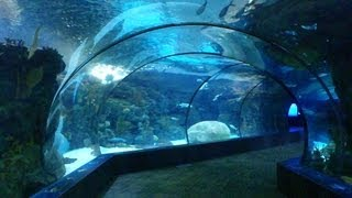 Download Our Trip to The Omaha Zoo Video