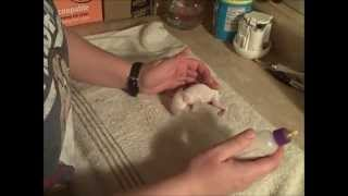 Download How to raise a baby bunny without a momma rabbit, Part 1 Video