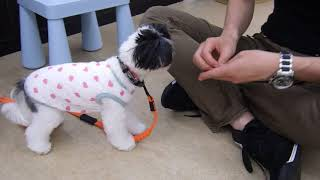 Download 犬の幼稚園 メグちゃんとトレーニング Video