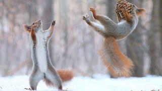 Download Top Funny Squirrel Videos Compilation - Cute Animals Video