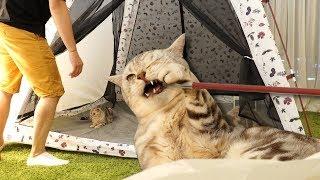 Download 고양이들 옆에서 텐트치면 반응은?! 꿀잼 Video