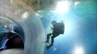 Download Afrykarium Oceanarium ZOO Wrocław - Wielkie Testowanie (płaszczki, rekiny, egzotyczne ryby) Video