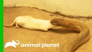 Download 5 Great Feeding Time Moments From The Zoo! Video