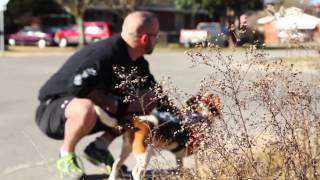 Download Inseparable - A Service Dog Story Video