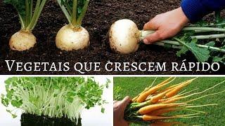 Download 9 Vegetais que Crescem em Menos de 2 Meses Video