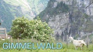 Download Mountain Villages: Gimmelwald and Mürren | SWITZERLAND Video