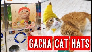 Download The Japanese way to annoy cats | CAT GACHAPON Video