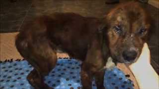 Download Rudy - Beaten and abused dog saved from death needs your help! Video