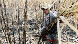 Download El Salvador's sugarcane workers and their silent killer - The Cure Video