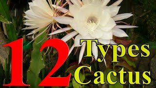 Download Cactus Plants - 12 Types of Cactus you can Grow at Home Video