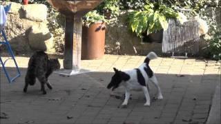 Download Hund vs Katze. Dog vs Cat. Video